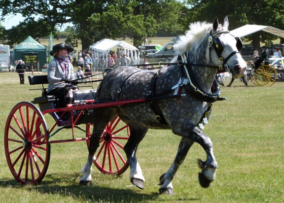 Euston Rural Pastimes set to return to raise funds
