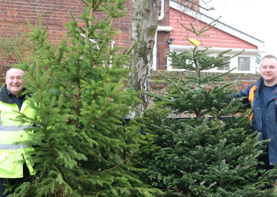 Crop of Christmas trees leads to funding boost for Hospice