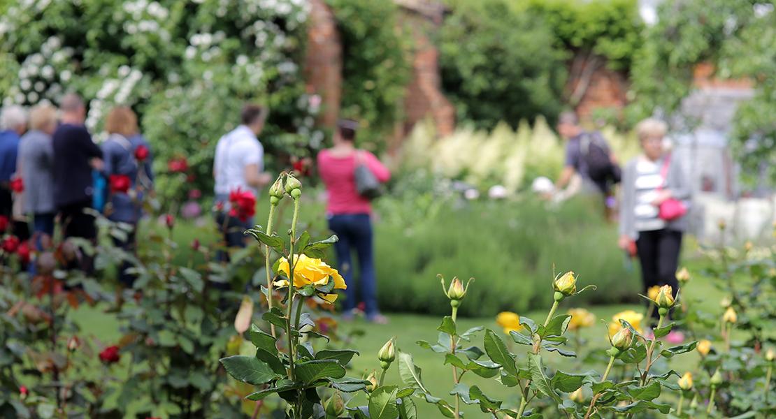 People strolling round a summer garden